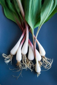 Ramps look a little like leafy scallions and taste like garlic and onions (www.organicgardening.com)