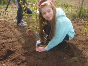 Planting our very own blueberry bushes!